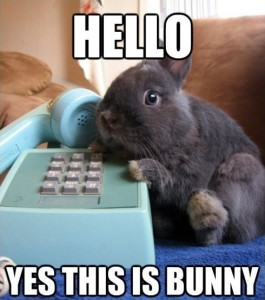 Hello-Yes-this-is-bunny[490x555]