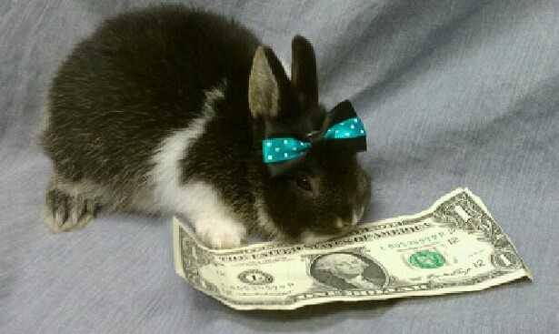 bunny_with_bow_eating_dollar