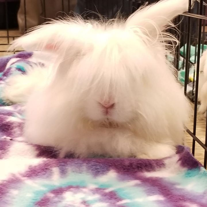 Events | Tampa Bay House Rabbit Rescue Inc